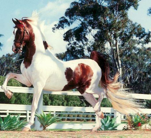 Интересные факты о мастях лошадок